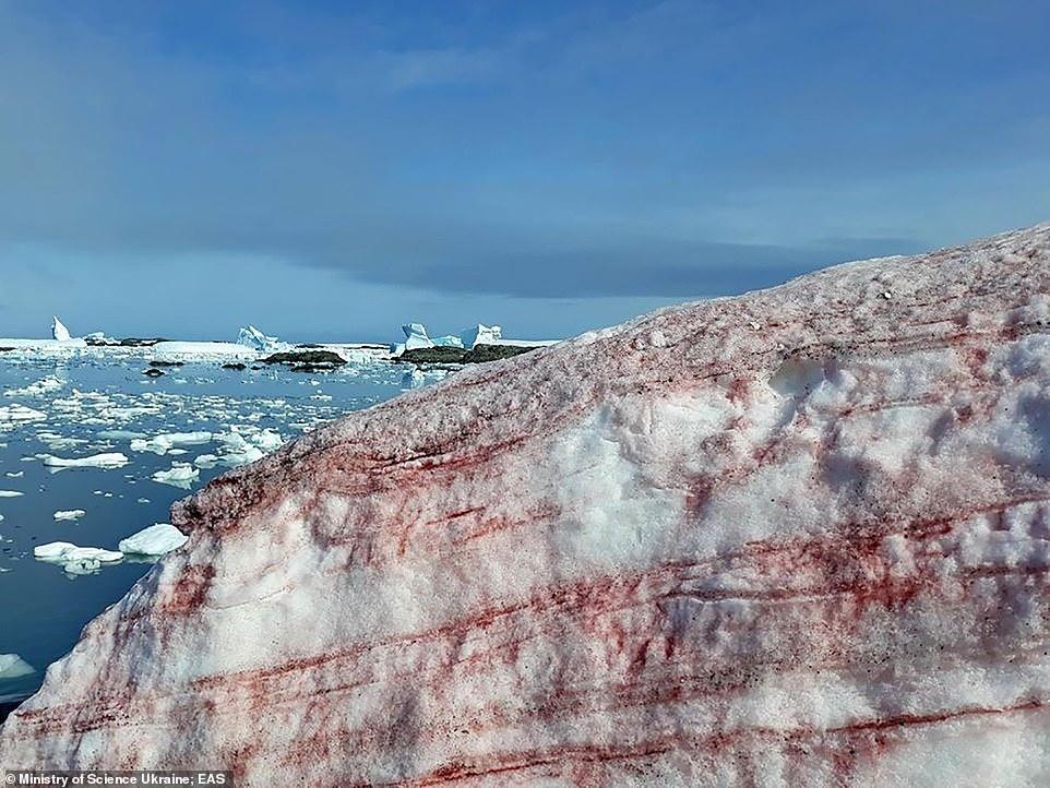 Арбузный снег в Антарктиде. Удивительный феномен